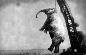 ELEPHANT DEAD 2